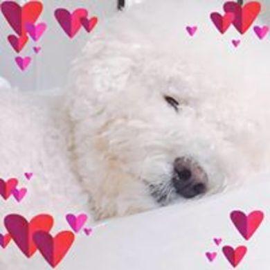 lee wonjun profile picture